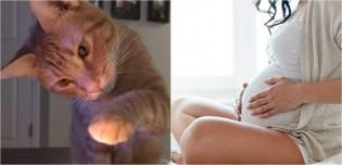 Gato fura preservativos do dono e se torna responsável pela chegada do segundo bebê da família