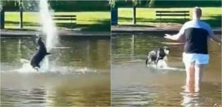Em vídeo hilário, cachorro se diverte em fonte de água enquanto dono só lamenta ter que buscá-lo
