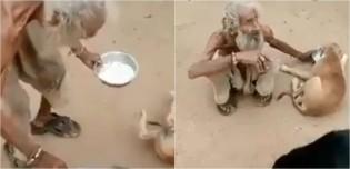 'Rico de amor': vídeo de morador de rua alimentando seus cães comove a internet