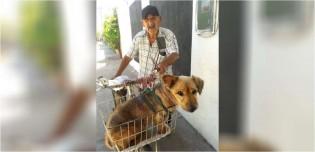 Idoso de 90 anos adapta bicicleta para transportar seu amado cão que sofre de artrite