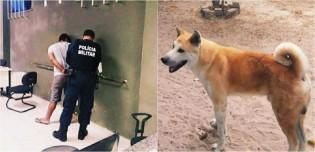 Homem é detido por populares após furtar cachorro da raça akita e animal é recuperado