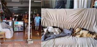 Comerciante disponibiliza sofá em seu estabelecimento para cães de rua descansarem