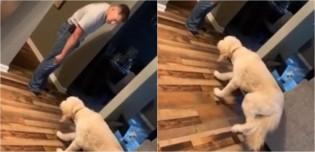 Cão anda em 'câmera lenta' até o dono com medo de levar sermão após fazer bagunça; assista