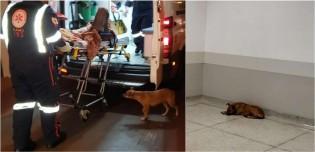 Cachorrinha fiel acompanha dono inconsciente até hospital no PR; vídeo
