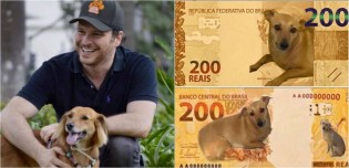 Deputado cria abaixo-assinado para que cédulas de R$ 200 tenham a imagem de vira-lata caramelo