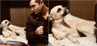 Dono tem 'conversa séria' com sua cadela sobre o paradeiro do seu pai e vídeo viraliza no TikTok; confira
