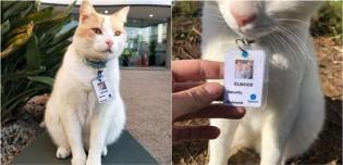 Depois de um ano visitando hospital, gatinho ganha crachá de funcionário