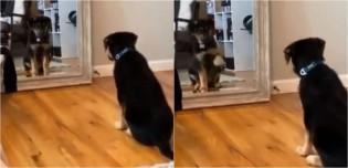 Cachorro é filmado treinando para superar timidez em frente a espelho e derrete corações dos internautas