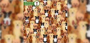Encontre o cachorro: marca britânica de rações desafia você a encontrar cão que não se repete em imagem