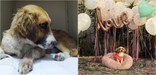 Cadela que recebia o pior tratamento pelo ex-dono ganha lar amoroso onde é tratada como uma rainha