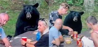 Urso-negro vê família fazendo piquenique em floresta nos Estados Unidos e resolve sentar a mesa