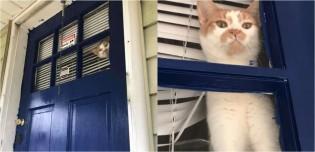 Gato faz olhar de desprezo total à dona porque ela foi ao quintal sem ele