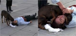 Cão de rua interrompe teatro em via pública para abraçar ator que fingia sofrer