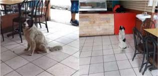 Cachorro que tem dono irresponsável vai todos os dias a restaurante e espera educadamente por alimento