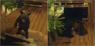 Vídeo: Mamãe ursa repreende filhote que tentou espiar mulher pela janela de casa