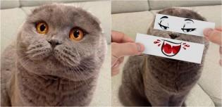 Dono cria recortes de rosto hilários para brincar com seus gatos e dar a eles emoções aleatórias