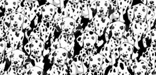 Desafio: encontre o cão sem manchas no meio de vários dálmatas