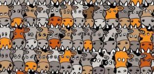 Desafio: será que você consegue localizar o cão escondido no meio das vacas?