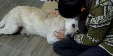 Foto: Reprodução Youtube /  Howl Of A Dog