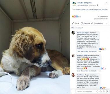 Foto: Facebook / Peludos en Apuros
