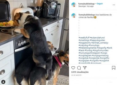 Foto: Reprodução Instagram / funnybubbledogs