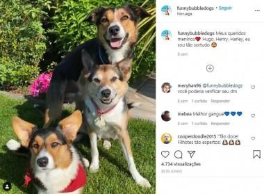 Foto: Instagram / funnybubbledogs