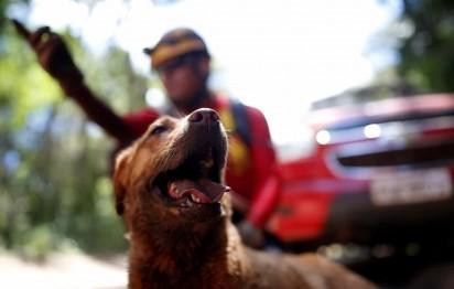 Cachorro usado pelos bombeiros para buscas descansa coberto de lama em Brumadinho, na quarta-feira (30) — Foto: Adriano Machado/Reuters