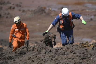 Cão farejador é usado por bombeiros na busca por vítimas da lama da barragem estourada em Brumadinho, na quinta-feira (31) — Foto: Mauro Pimentel/AFP
