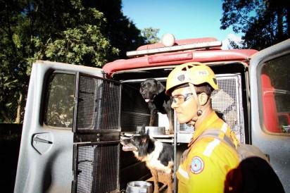 Cachorros auxiliam bombeiros e voluntários em busca de vítimas e desaparecidos em Brumadinho, na segunda-feira (28) — Foto: Fernando Moreno/Futura Press/Estadão Conteúdo
