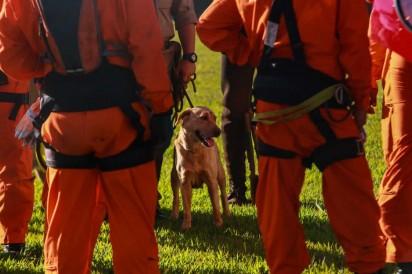 Cão é usado por bombeiros nas buscas por vítimas do rompimento da barragem em Brumadinho, na terça-feira (29) — Foto: Rodney Costa/Eleven/Estadão Conteúdo