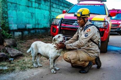 Cão farejador auxilia buscas por vítimas e desaparecidos em Brumadinho, na terça-feira (29) — Foto: Fábio Barros/Agência F8/Estadão Conteúdo