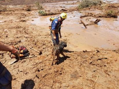 Cão de resgate Hunter, do Corpo de Bombeiros de SC, participa de força-tarefa enviada a Brumadinho na quinta-feira (31) — Foto: Corpo de Bombeiros/Divulgação