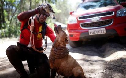 Bombeiro dá água a cão que trabalhava no resgate de vítimas da tragédia em barragem da Vale em Brumadinho, na quarta-feira (30) — Foto: Adriano Machado/Reuters