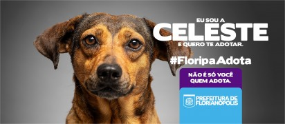 Foto: DIBEA - Diretoria do Bem-Estar Animal Florianópolis PMF
