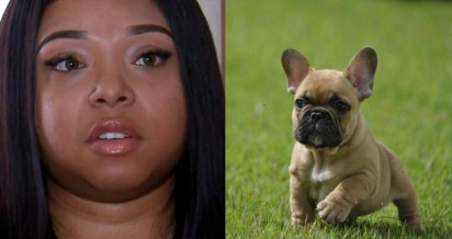 Hunter Cason (CNN)   cachorro:imagem ilustrativa