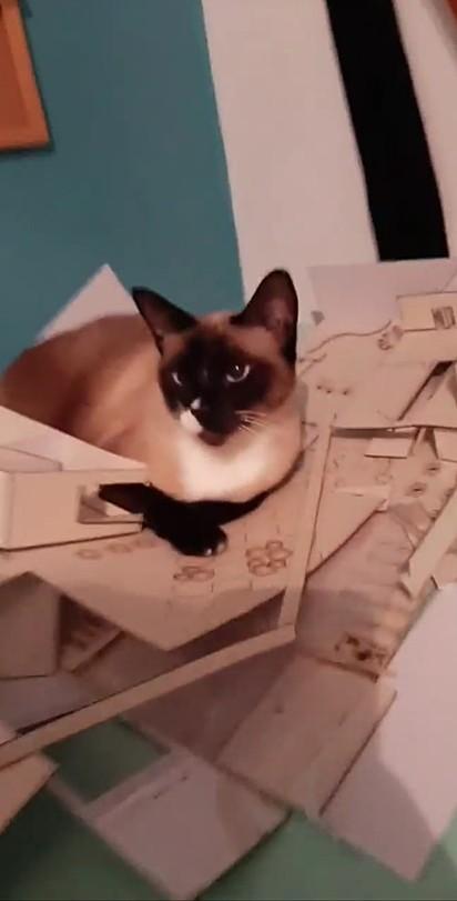 O gatinho bem relaxado em cima da maquete destruída.