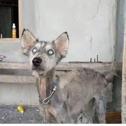 O jovem Rico Soegiart que encontrou a husky. (Foto: Facebook / Ria Myburgh)