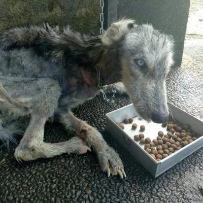 Quando foi encontrada a cachorrinha estava em estado grave de desnutrição. (Foto: Facebook / Ria Myburgh)
