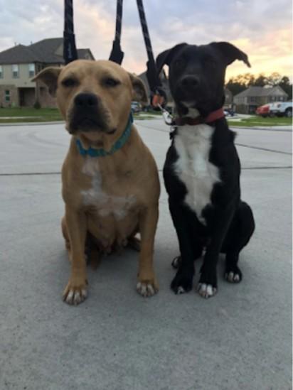 The Adventures Of Bridget and Louie