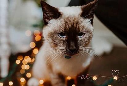 A gatinha foi adotada por uma família amorosa.