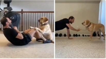 Foto: Reprodução Youtube/Magnus The Therapy Dog