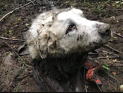Durante uma caminhada, o cão se perdeu de suas tutoras.