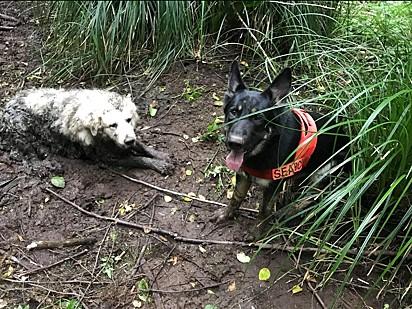 Foto: Three Retrievers Pet Rescue/Facebook O cachorro Tino ao lado do cãozinho de 11 anos.