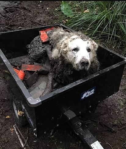 Foto: Three Retrievers Pet Rescue/Facebook O cachorro estava há dois dias preso na lama.