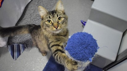 Foto: Battersea Dogs & Cats Home