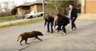 Foto: Reprodução Youtube/The Humane Society