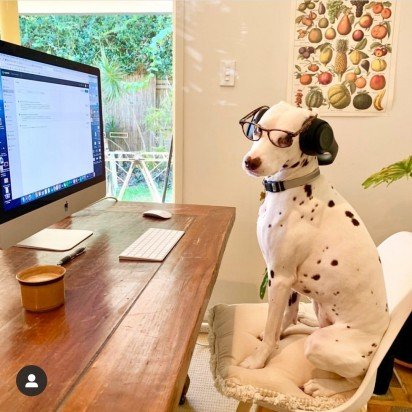 DogsWorkingFromHome / Instagram