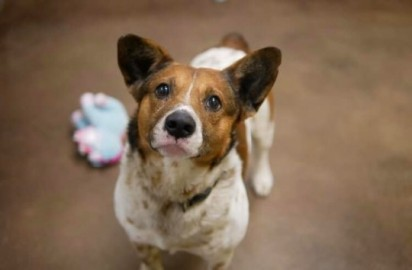 Foto: Florence-Lauderdale Animal Services