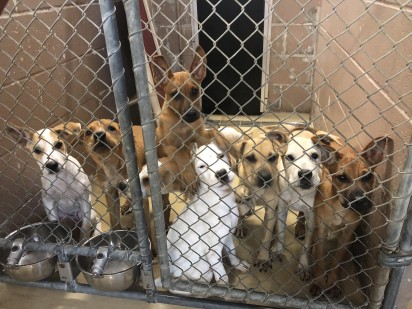 Foto: Harris County Animal Shelter.