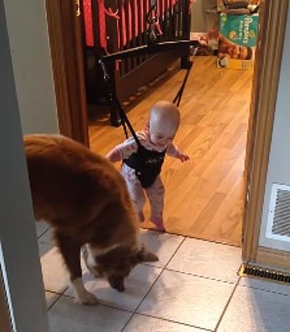 A cadelinha Day e a bebê.